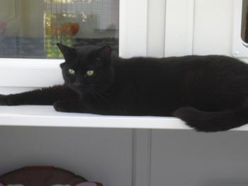 Boarding Cattery in Dunbar and East Lothian. Vonvarda Cats Hotel feline guest.